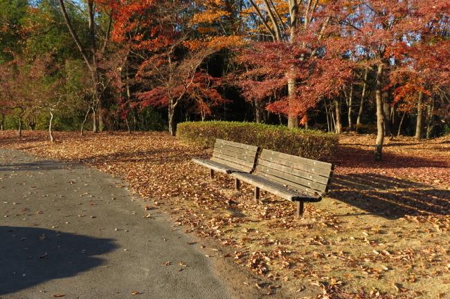 落ち葉のベンチ _a0357206_20595172.jpg