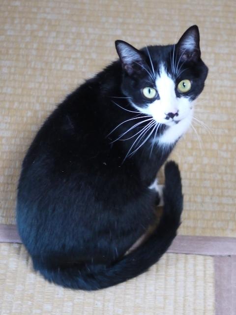猫のお留守番 にこくん編。_a0143140_22513875.jpg