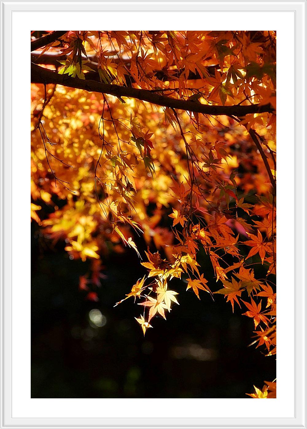 Red leaves final..._c0095342_12463221.jpg