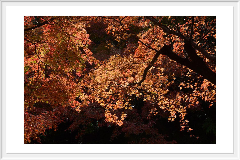 Red leaves final..._c0095342_12463227.jpg