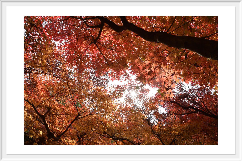 Red leaves final..._c0095342_12463335.jpg