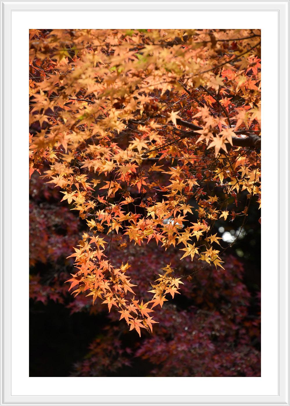 Red leaves final..._c0095342_12463355.jpg