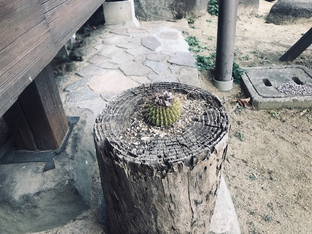 生駒の山の昼。生駒~万博。_a0050302_00332027.jpg