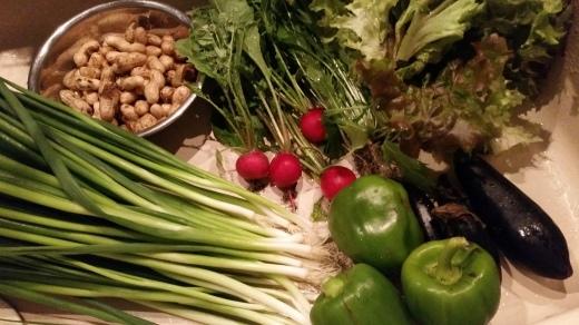収穫色々~ローゼル、椎茸などなど_f0208315_08205530.jpg