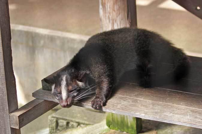 市川市動植物園の動物たち~警戒!ミーアキャット!!_b0355317_21043505.jpg