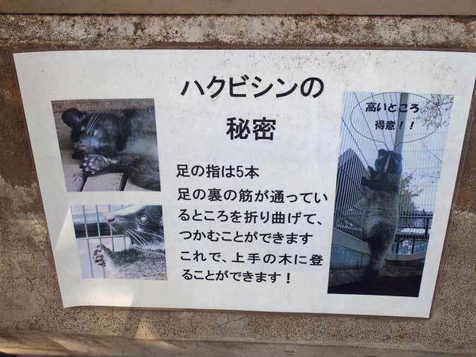 市川市動植物園の動物たち~警戒!ミーアキャット!!_b0355317_21053709.jpg
