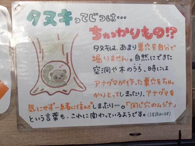 市川市動植物園の動物たち~警戒!ミーアキャット!!_b0355317_21073112.jpg