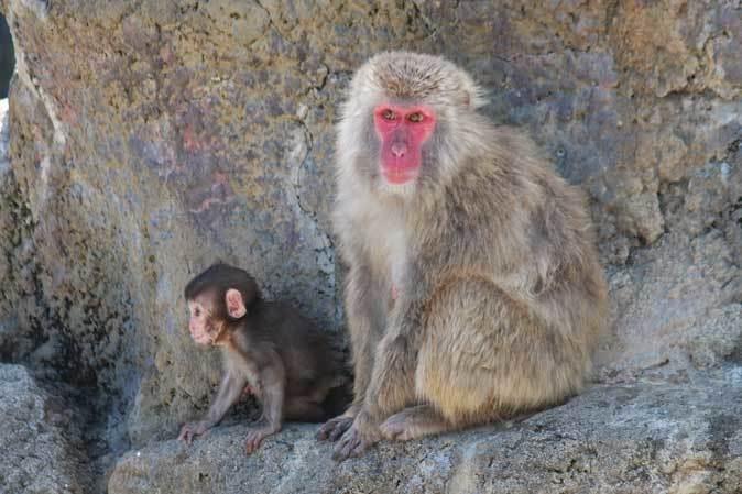 市川市動植物園の動物たち~警戒!ミーアキャット!!_b0355317_22121019.jpg