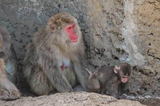 市川市動植物園の動物たち~警戒!ミーアキャット!!_b0355317_22130216.jpg