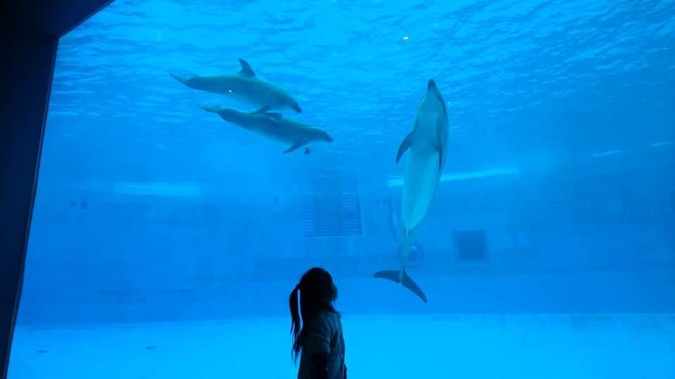 名古屋港水族館へいってきました!_f0373339_1250847.jpg