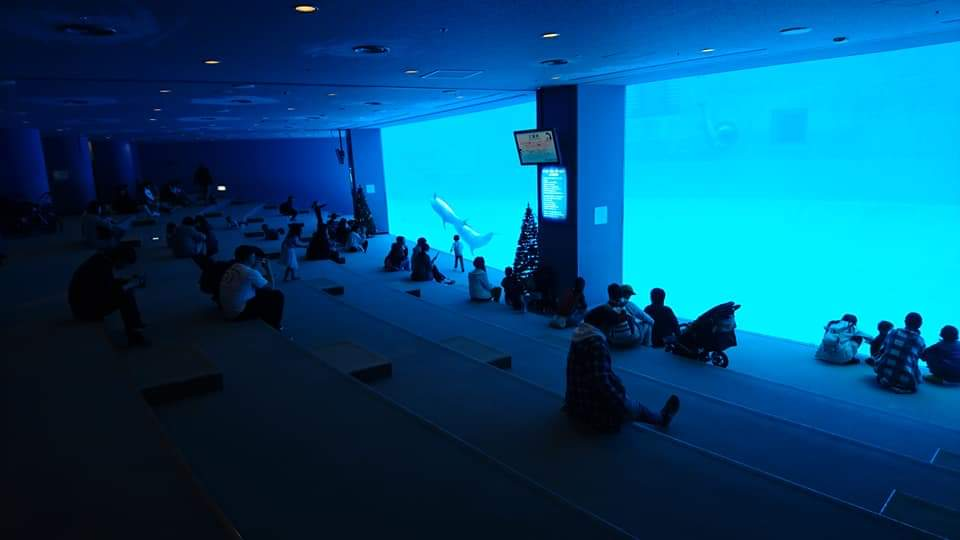 名古屋港水族館へいってきました!_f0373339_1250912.jpg