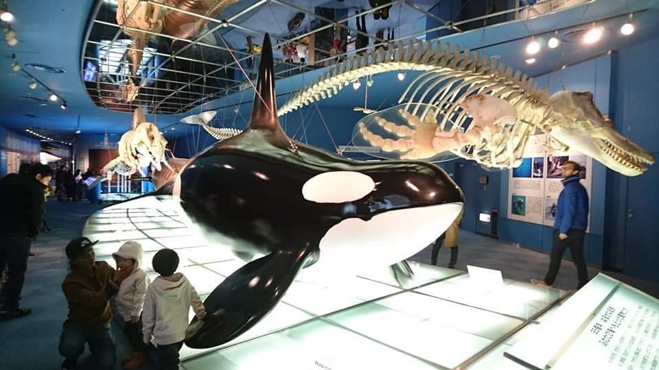 名古屋港水族館へいってきました!_f0373339_1250983.jpg