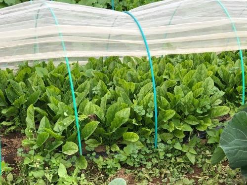 今朝の収穫  はこちらです_c0222448_11153091.jpg