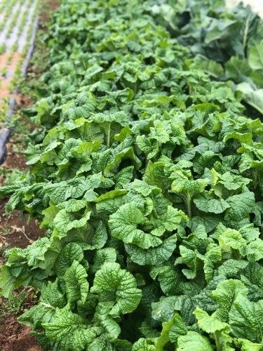今朝の収穫  はこちらです_c0222448_11154653.jpg