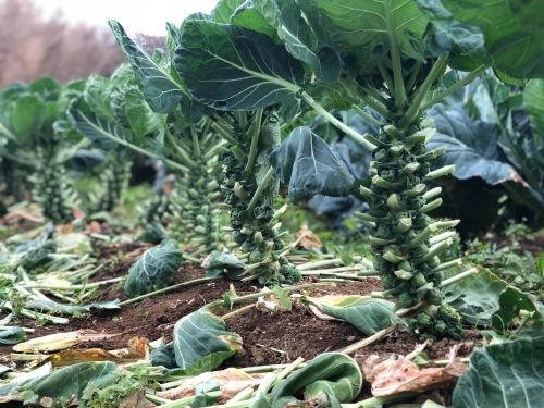今朝の収穫  はこちらです_c0222448_11155982.jpg