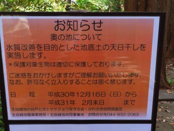 生田緑地 秋(3)_e0129750_22092585.jpg