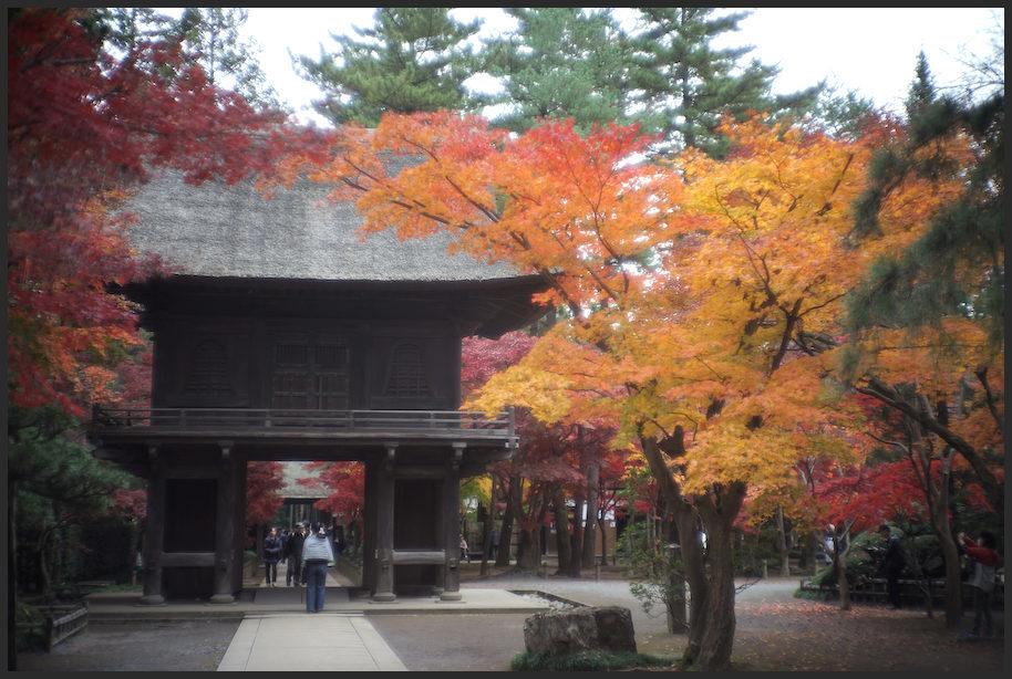 平林寺 -1_b0340572_17491827.jpg