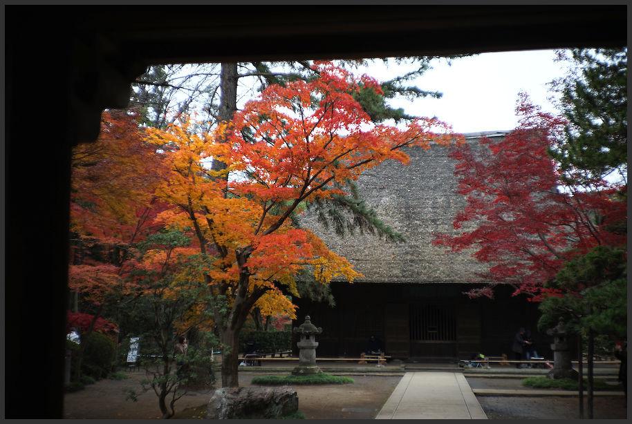 平林寺 -1_b0340572_17492462.jpg