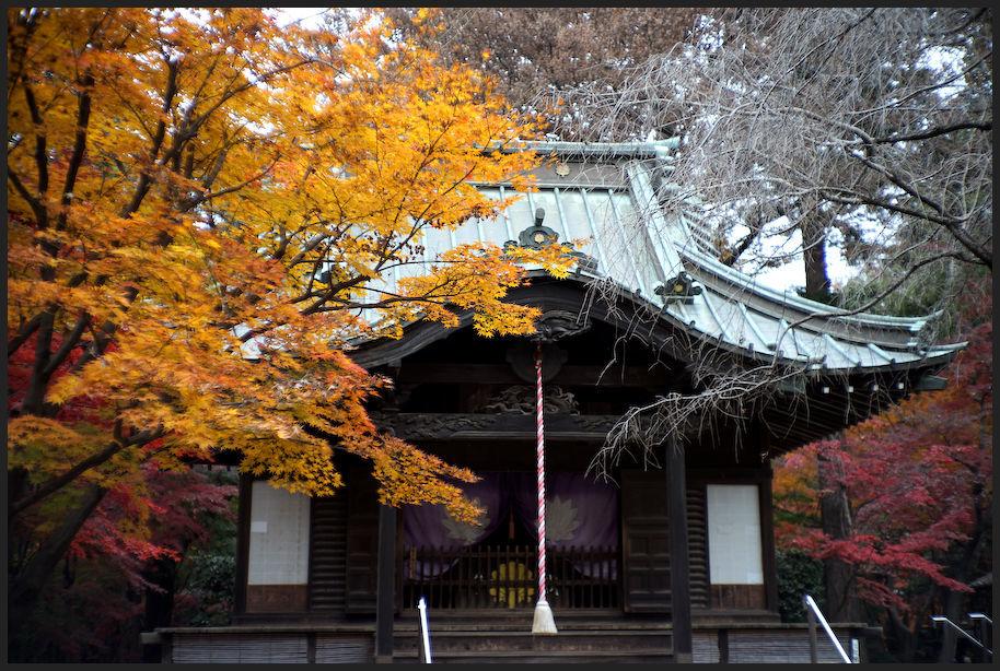 平林寺 -1_b0340572_17493262.jpg