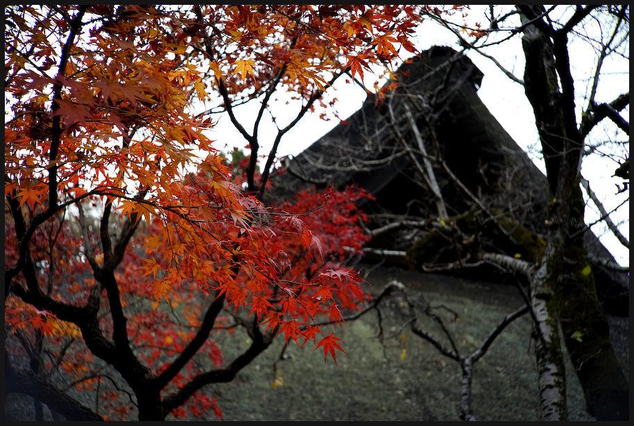 平林寺 -2_b0340572_22204081.jpg