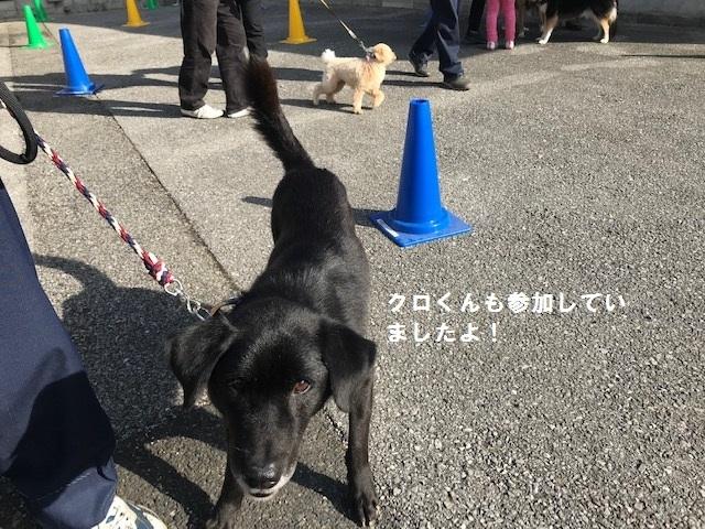 【移動先募集】じいちゃん犬、通院してきました_f0242002_11075200.jpg