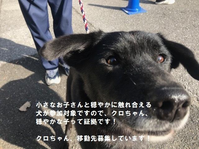 【移動先募集】じいちゃん犬、通院してきました_f0242002_11075601.jpg