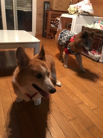 【移動先募集】じいちゃん犬、通院してきました_f0242002_11100358.jpg