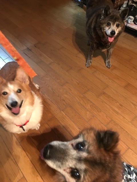 【移動先募集】じいちゃん犬、通院してきました_f0242002_11130320.jpg