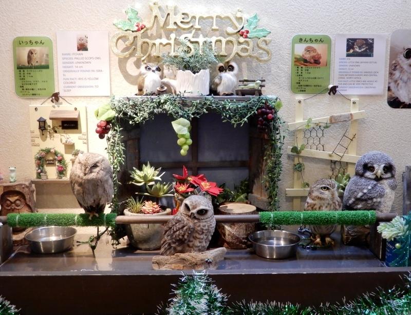 ふくろうカフェのクリスマス* Welcome to Chouette Cafe_f0374041_09092517.jpg