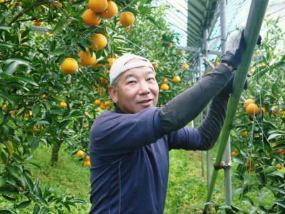 """究極の柑橘「せとか」 今週末の急激な""""寒""""に備え匠は一切の手を抜かず準備をしていました!_a0254656_18245427.jpg"""
