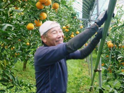 """究極の柑橘「せとか」 今週末の急激な""""寒""""に備え匠は一切の手を抜かず準備をしていました!_a0254656_18301360.jpg"""