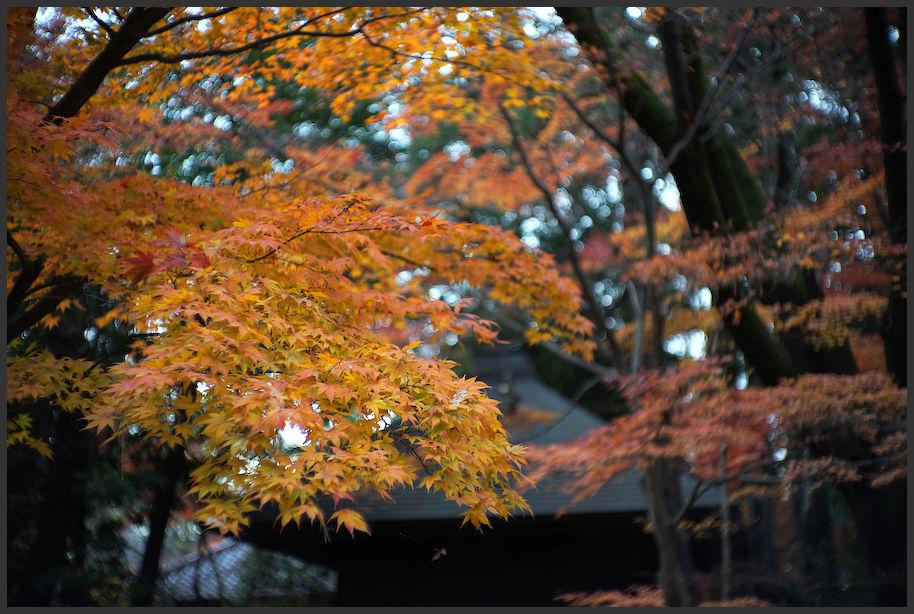 平林寺 -3_b0340572_20162796.jpg