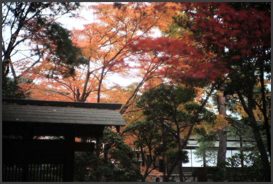 平林寺 -3_b0340572_20163741.jpg