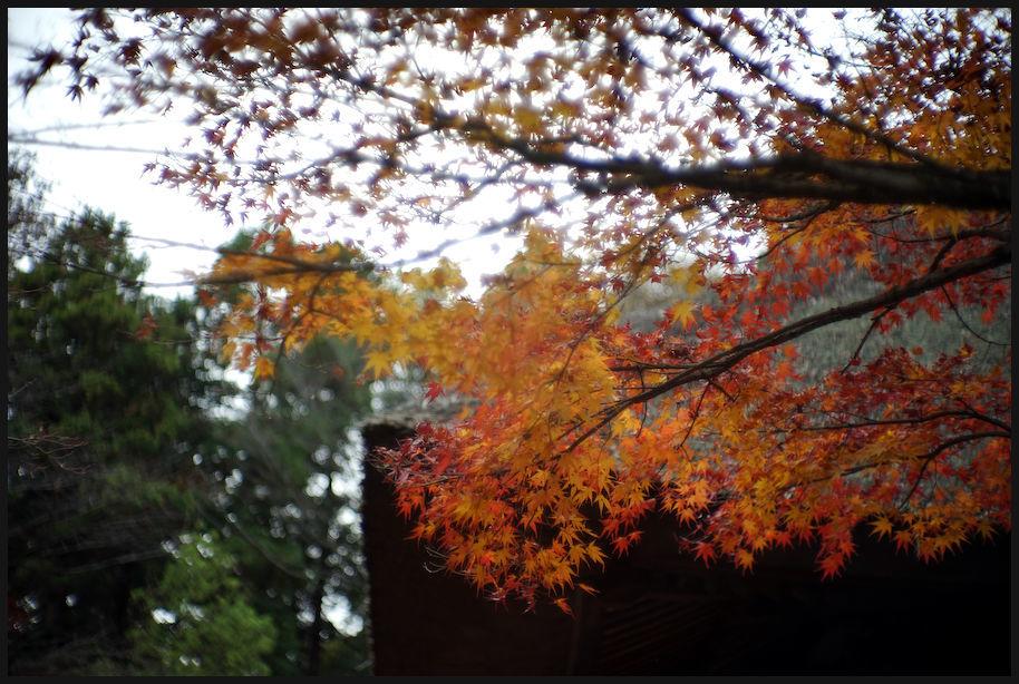 平林寺 -3_b0340572_20171066.jpg