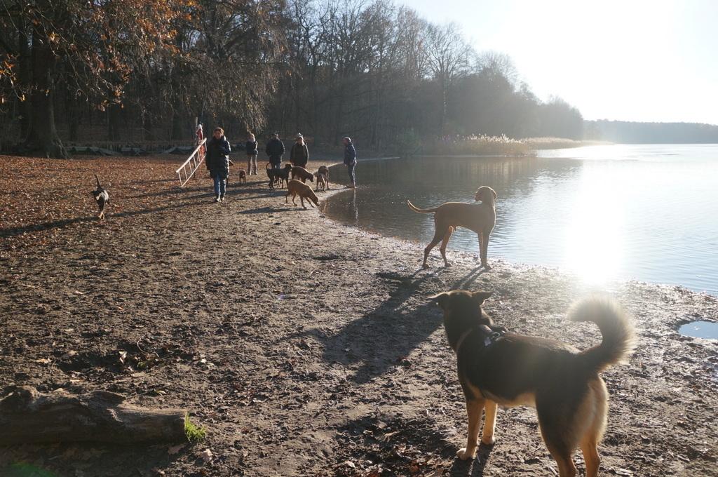 森の中の湖畔散歩_c0180686_22350952.jpg