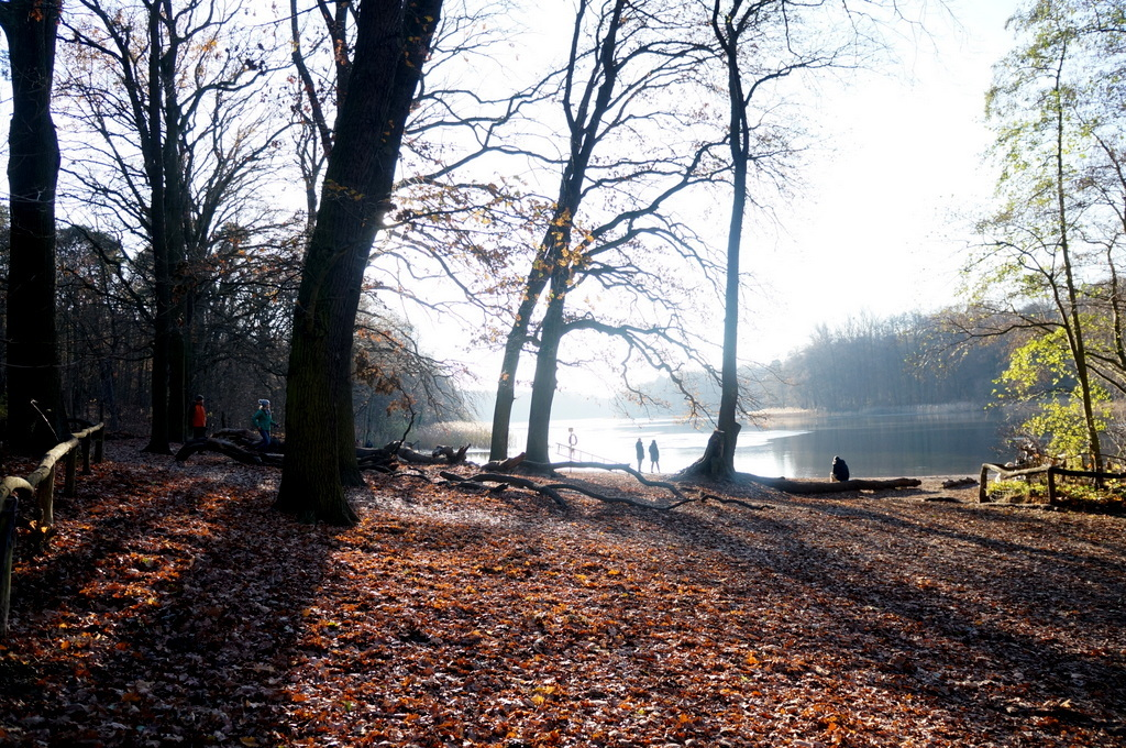 森の中の湖畔散歩_c0180686_22360937.jpg