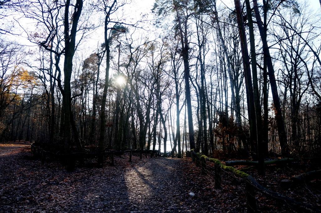森の中の湖畔散歩_c0180686_22362152.jpg