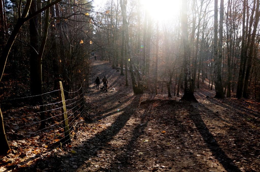 森の中の湖畔散歩_c0180686_22363021.jpg