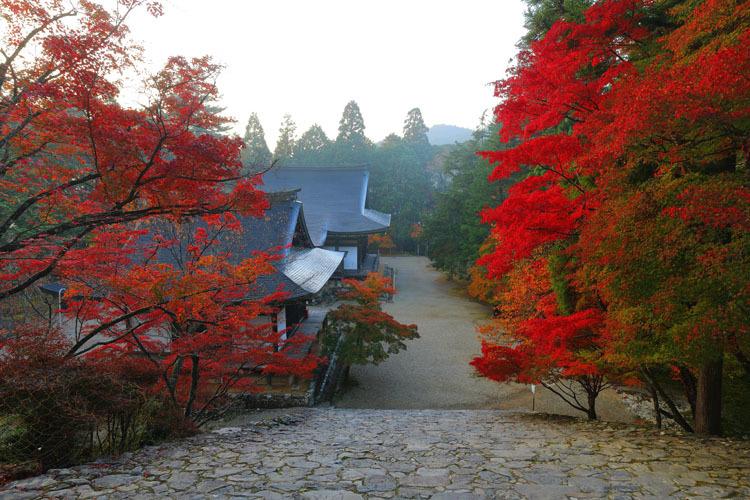 神護寺_e0051888_20055258.jpg