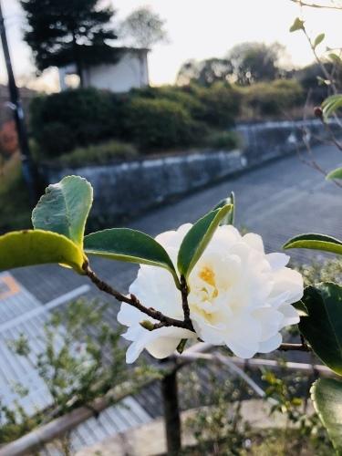 12月22日(土)完成見学会_a0148909_16011632.jpg