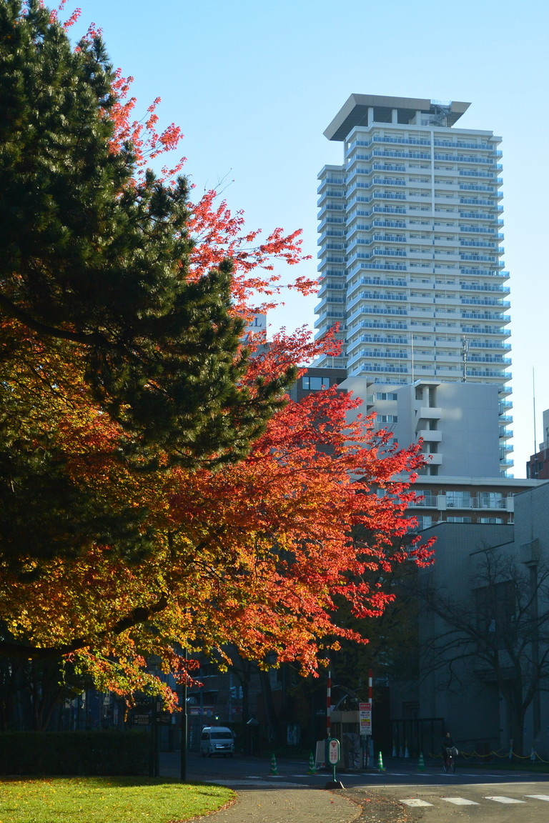 "2018年11月『深秋、札幌』 November 2018 ""Late Autumn, Sapporo\""_c0219616_14414578.jpg"