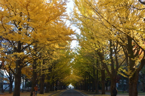 "2018年11月『深秋、札幌』 November 2018 ""Late Autumn, Sapporo\""_c0219616_14414612.jpg"