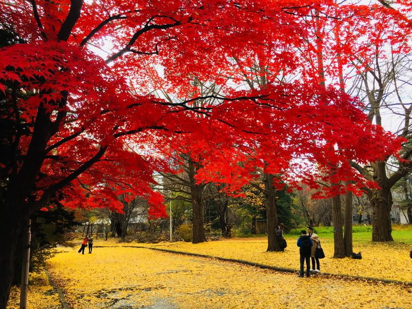 "2018年11月『深秋、札幌』 November 2018 \""Late Autumn, Sapporo\""_c0219616_14420781.jpg"