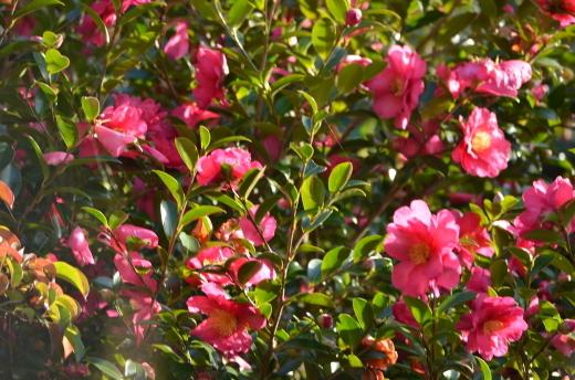 春に向けての作業が始まりました。_e0135518_14074980.jpg