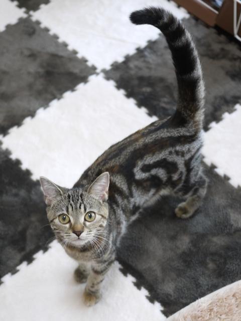 猫のお留守番 モルディブちゃん編。_a0143140_20433866.jpg