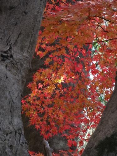 ゆふの木染めの着物_d0159384_23342257.jpg