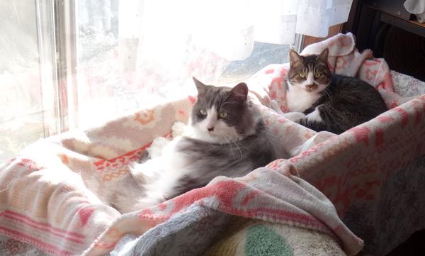 秋の陽ざし、猫部屋の2ニャン♪_a0136293_17231544.jpg