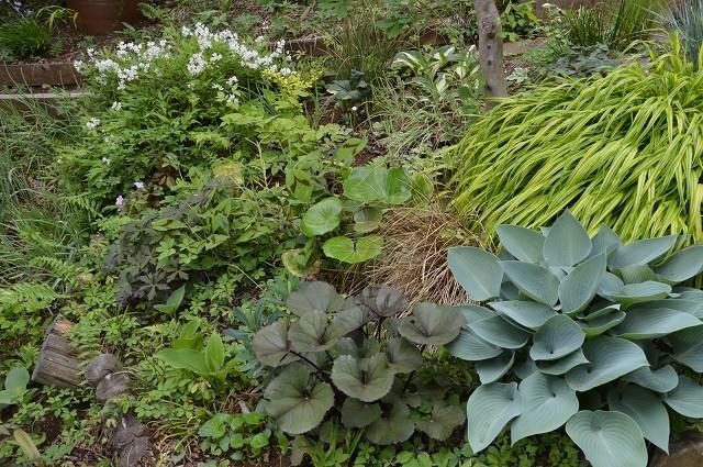 4月23・26日の庭。_c0124100_15214574.jpg