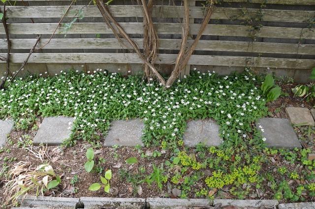 4月23・26日の庭。_c0124100_15215641.jpg