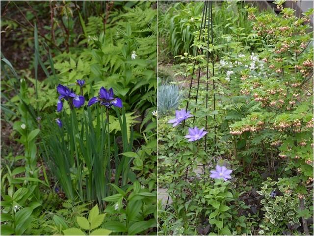 4月23・26日の庭。_c0124100_15223992.jpg